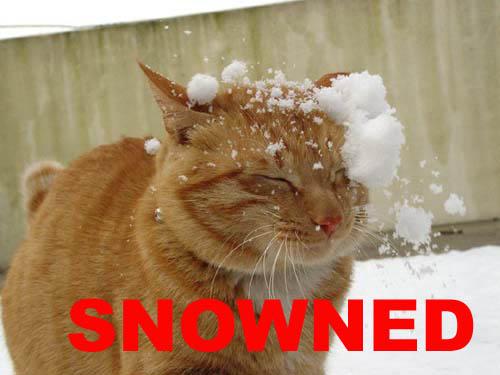 Snowned.jpg